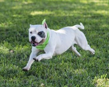 The Top 5 Most Popular Female Pitbull Names