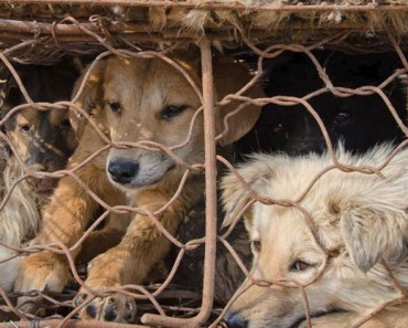 We Still Have a Long Way to Go in Ending Dog Meat Trade