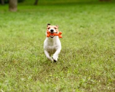 What Do I Do if My Dog ate Chicken Bones?