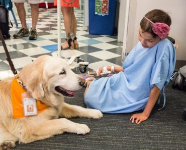 Is Your Dog Cut Out to be a Therapy Dog?