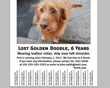 The Dos and Don'ts of Making a Lost Dog Flyer