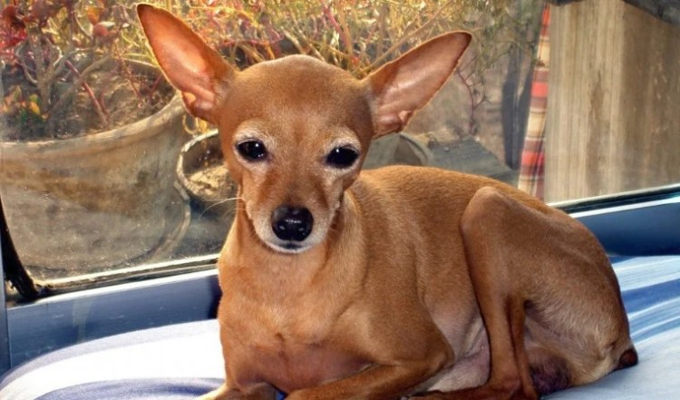 A deer-like puppy