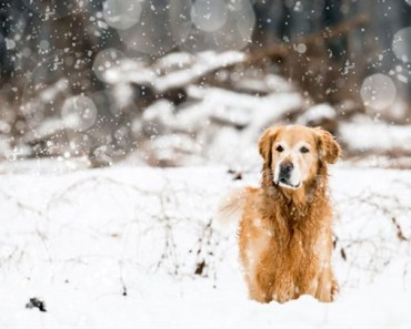 Five of the Biggest Winter Health Hazards for Dogs