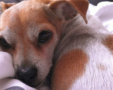 What Should You Feed a Dog Who Has Cancer?