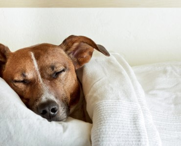 The Reasons Dogs Lick Themselves Before Sleeping
