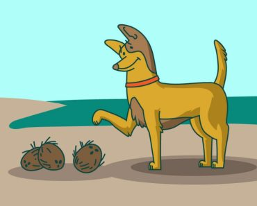 How to Use Coconut Oil for Your Dog's Itchy Skin