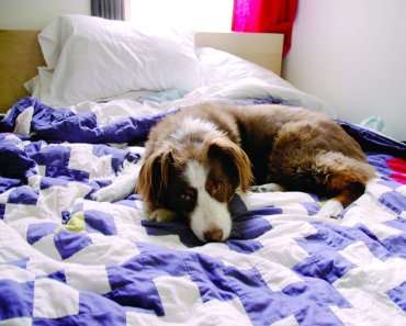 Why Is Your Dog Peeing on the Bed?