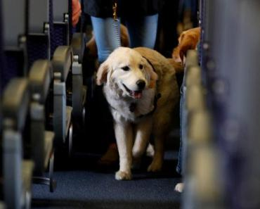 7 Tips To Make Your Dog Calm in an Airplane