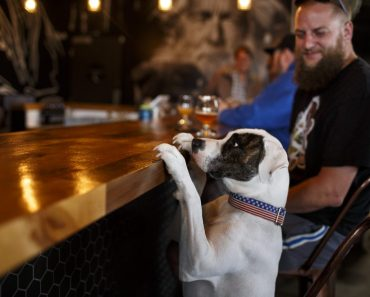 Dog Friendly Breweries