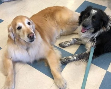 """Rescue Staff Helps Service Dog Diagnosed with Cancer Complete """"Bucket List"""""""