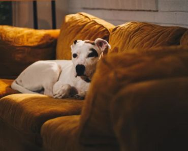 10 Awesome Indoor Activities for Dogs