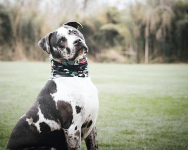 How Dog Breeds Differ in Their Sensitivity to Pain