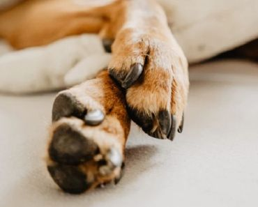How to Protect Your Dog's Paws in Summer Heat