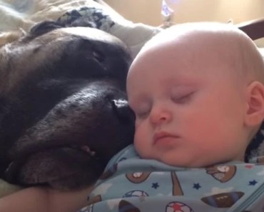 Baby Instantly Falls Asleep When He Hears His Dog Snoring