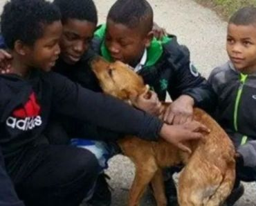 Heroic Boys Save Abandoned and Starving Dog Tied up with Bungee Cords