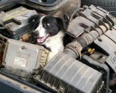 Woman Discovers Random Smiling Dog Inside Engine of Her Car