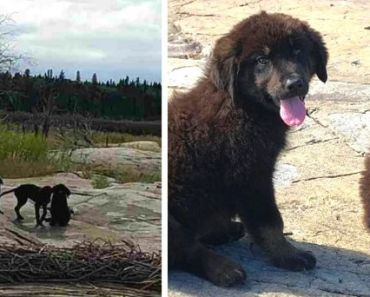 Boater Discovers Abandoned Puppies Crying from Starvation on Deserted Island