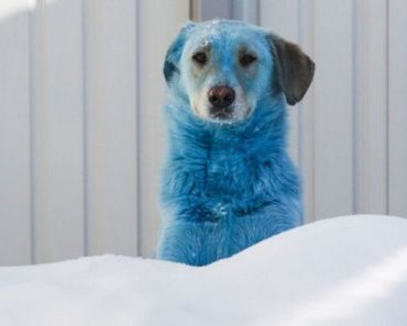Stray Dogs with Blue Fur are Found in Russia