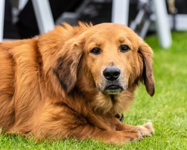 What to Do if your Dog Has a Zinc Deficiency