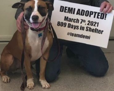 Dog Waits 809 Days and Final Gets Adopted in St. Louis Shelter