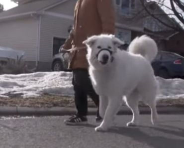 Dog Bravely Saves Owner Who Had a Seizure During Walk