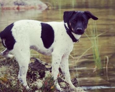 10 Things You Didn't Know About the Danish-Swedish Farmdog