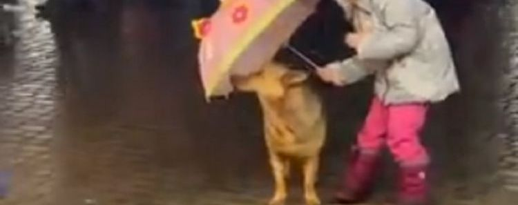 Child Selflessly Shields Dog From Rain With Umbrella in Heartwarming Video