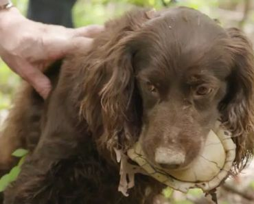 Dogs Unusual Skills Are Being Used to Save Turtles