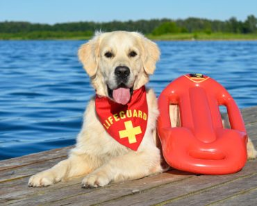 Canine Lifeguards Save Struggling Swimmers on Italian Beach