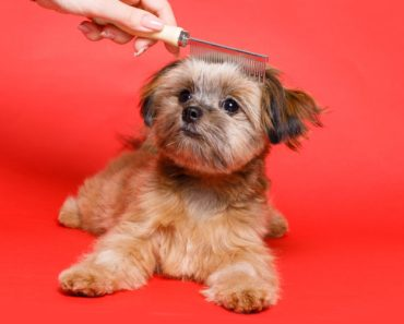 10 Things You Didn't Know about The Care-Tzu