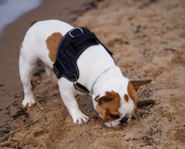 130 Dog Deaths May Be Linked to Midwestern Pet Foods