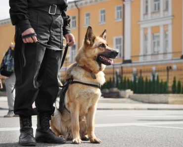 A Police Dog was Able to Find a Lost Wedding Ring on a Beach