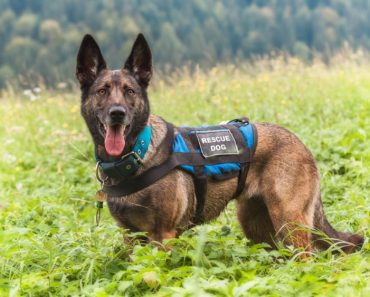 New York Exhibition Recognizes the Search and Rescue Dogs of 9/11