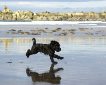 10 Things You Didn't Know About The Giant Schnoodle