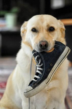 dog-633562_1920