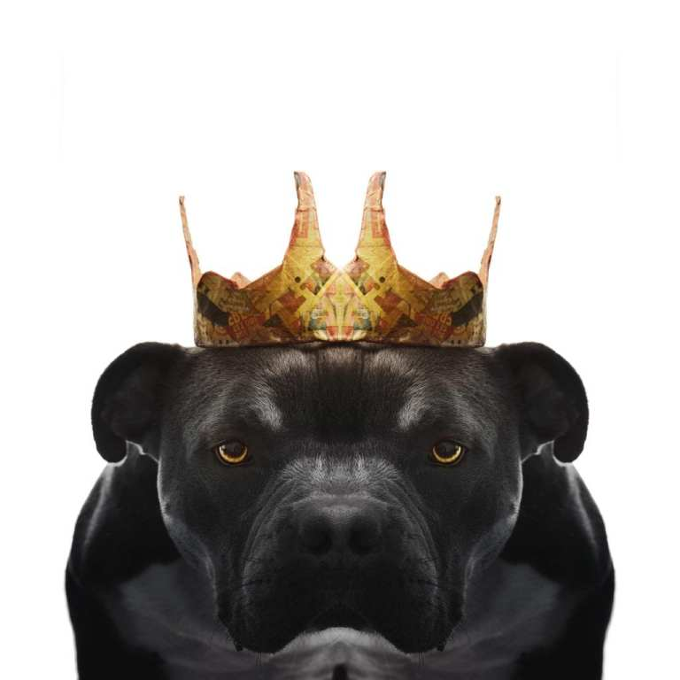 a dog photo wearing a crown