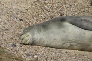 Monk Seal visit
