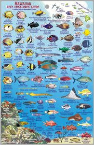 Hawaii Fish Card Oahu 2011 Side 2
