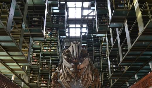 未来に先駆け!?メキシコシティの超かっこいい図書館!