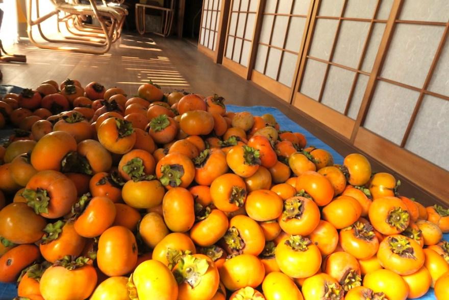 淡路島で柿狩りのお手伝い(収穫した柿)の写真