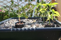 new-aquaponic-systems-126