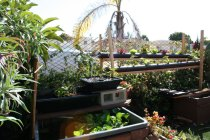 new-aquaponic-systems-131