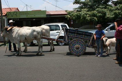 costa-rica-ox-cart-parade-atenas-13