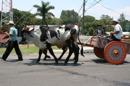 costa-rica-ox-cart-parade-atenas-2