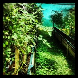 Costa Rica garden