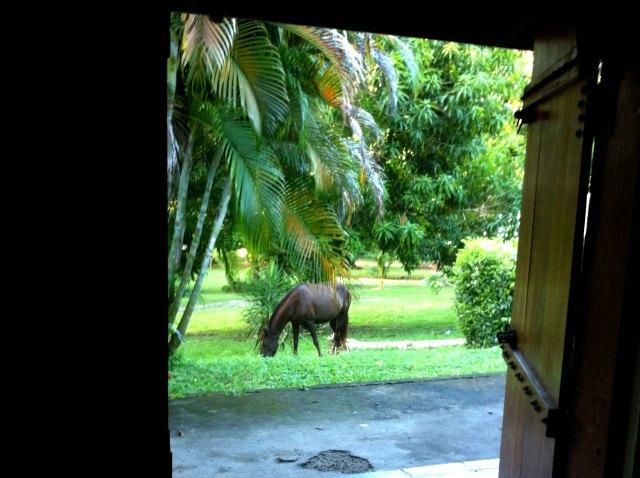 horse-door