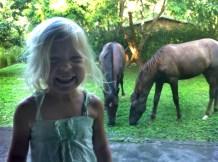 isa-horses