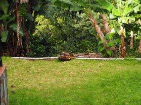 Tanager on Bird Bowl