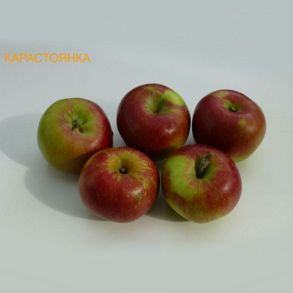 ябълки - карастоянка