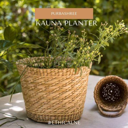 kauna planter 2
